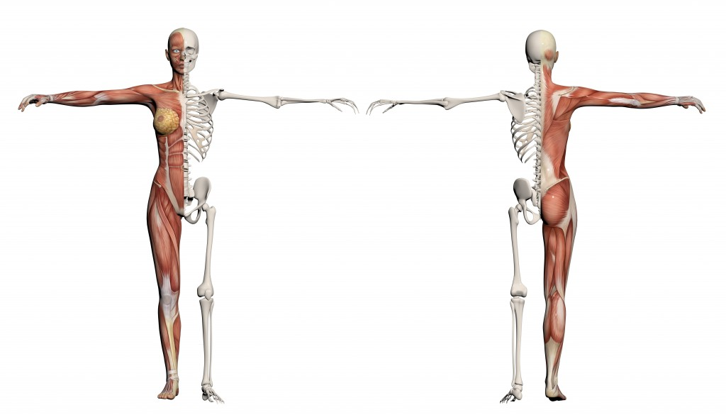 2-Way Stretch and the Anatomy of Pilates