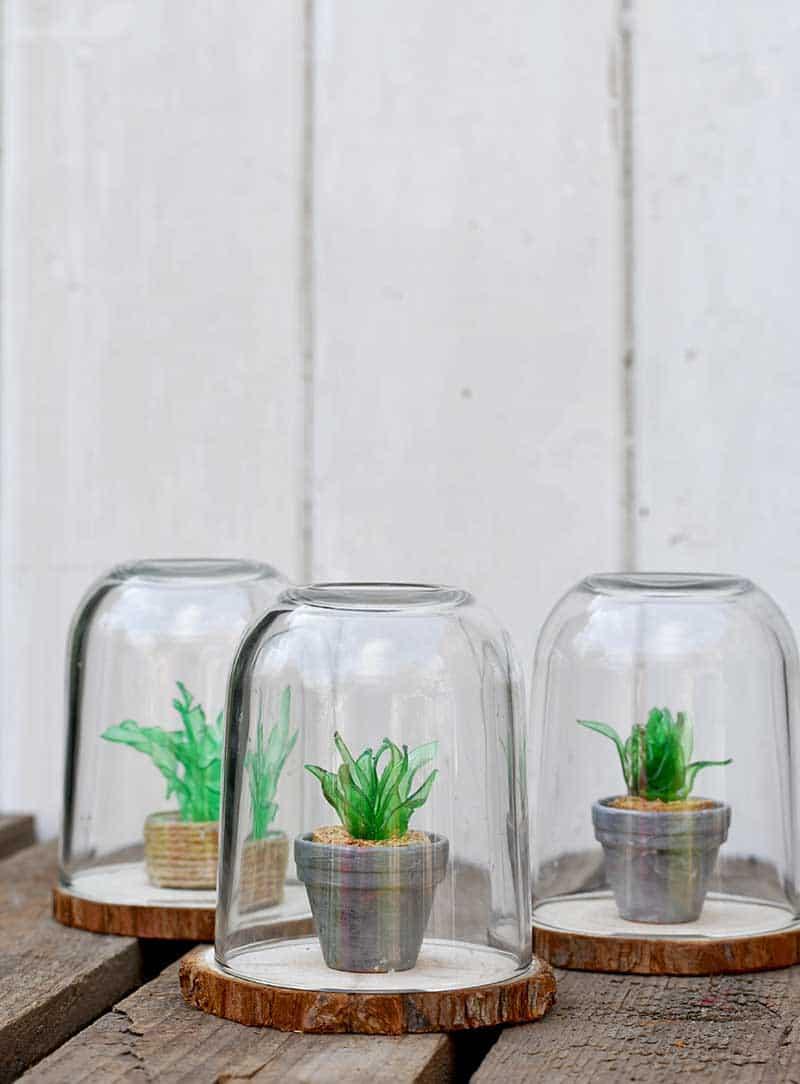 Repurposed Plastic Bottle Succulents and Terrarium