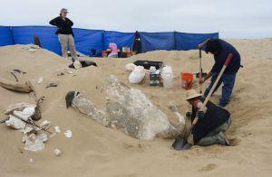 Constatação da esfinge gesso na praia na Califórnia