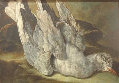 Arcangelo Resani, Piccione morto