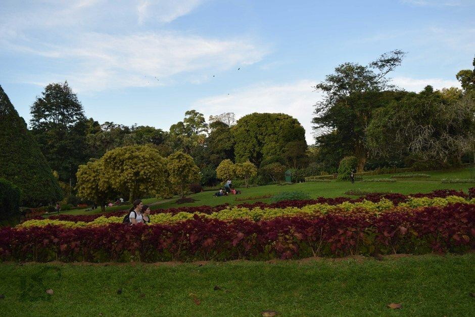 creativity-with-kay-srilanka-peradeniya-botanical-gardens (940x627)