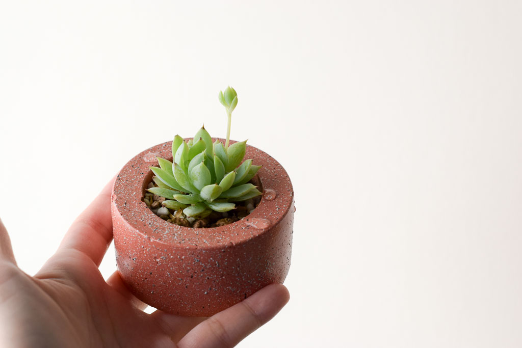 stone-tranquility-succulent