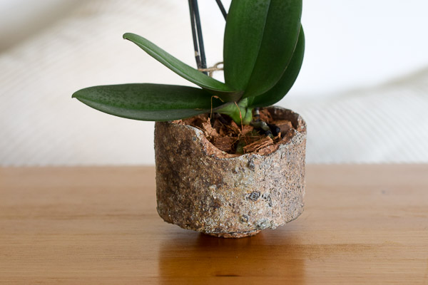 mini orchid styled in kyuchi close up