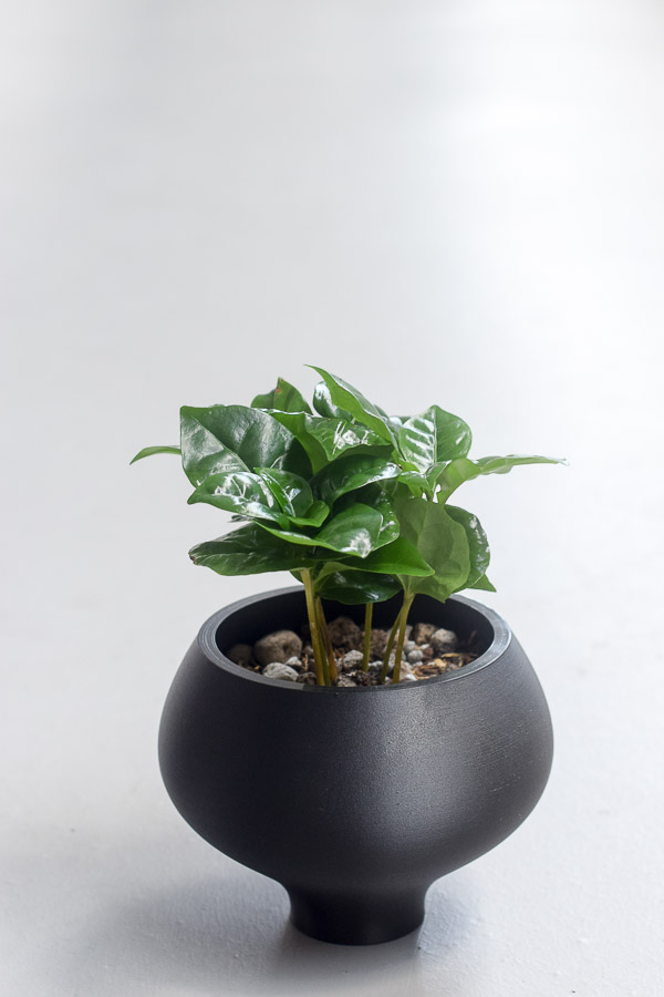 coffee styled in athena planter 3d printed
