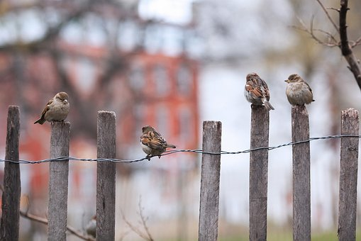 Winter Birds in the garden