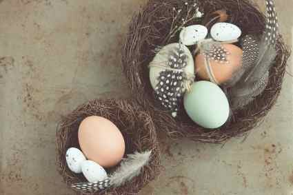 2 nests with various eggs and feathers