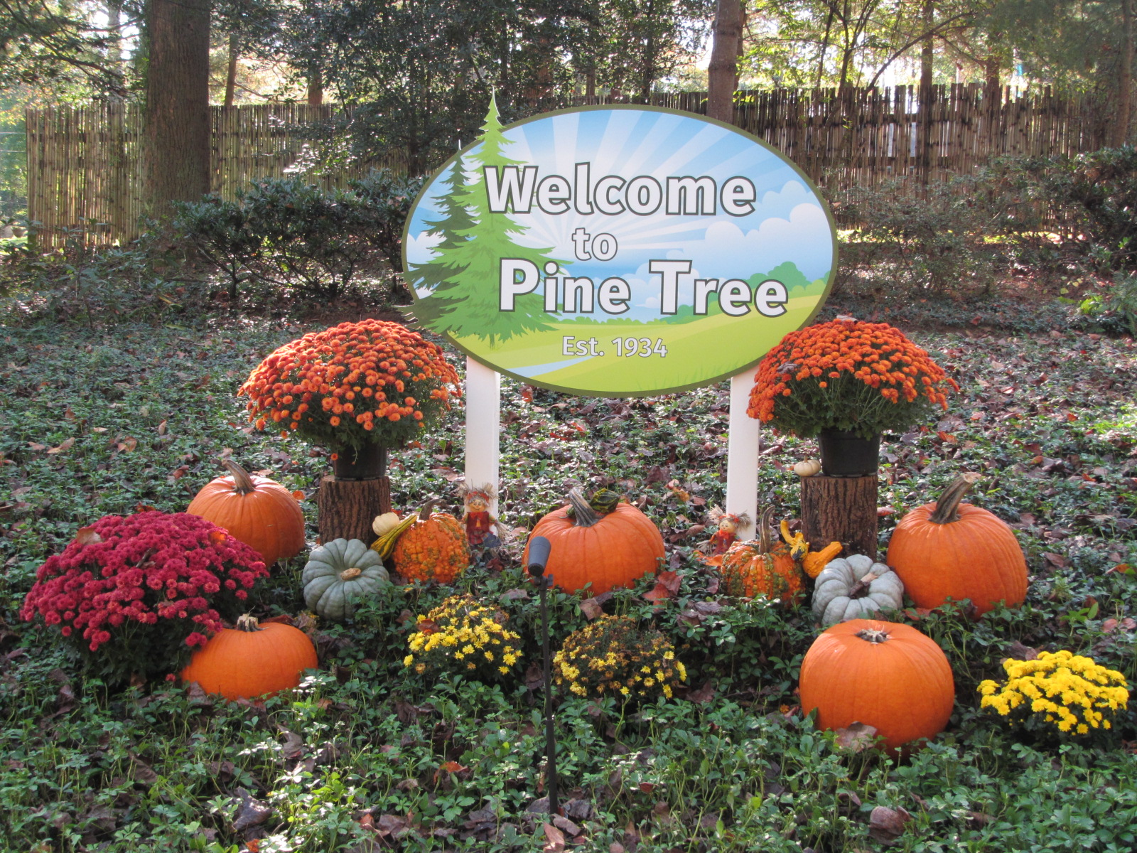 Welcome to Pine Tree - Fall 2017