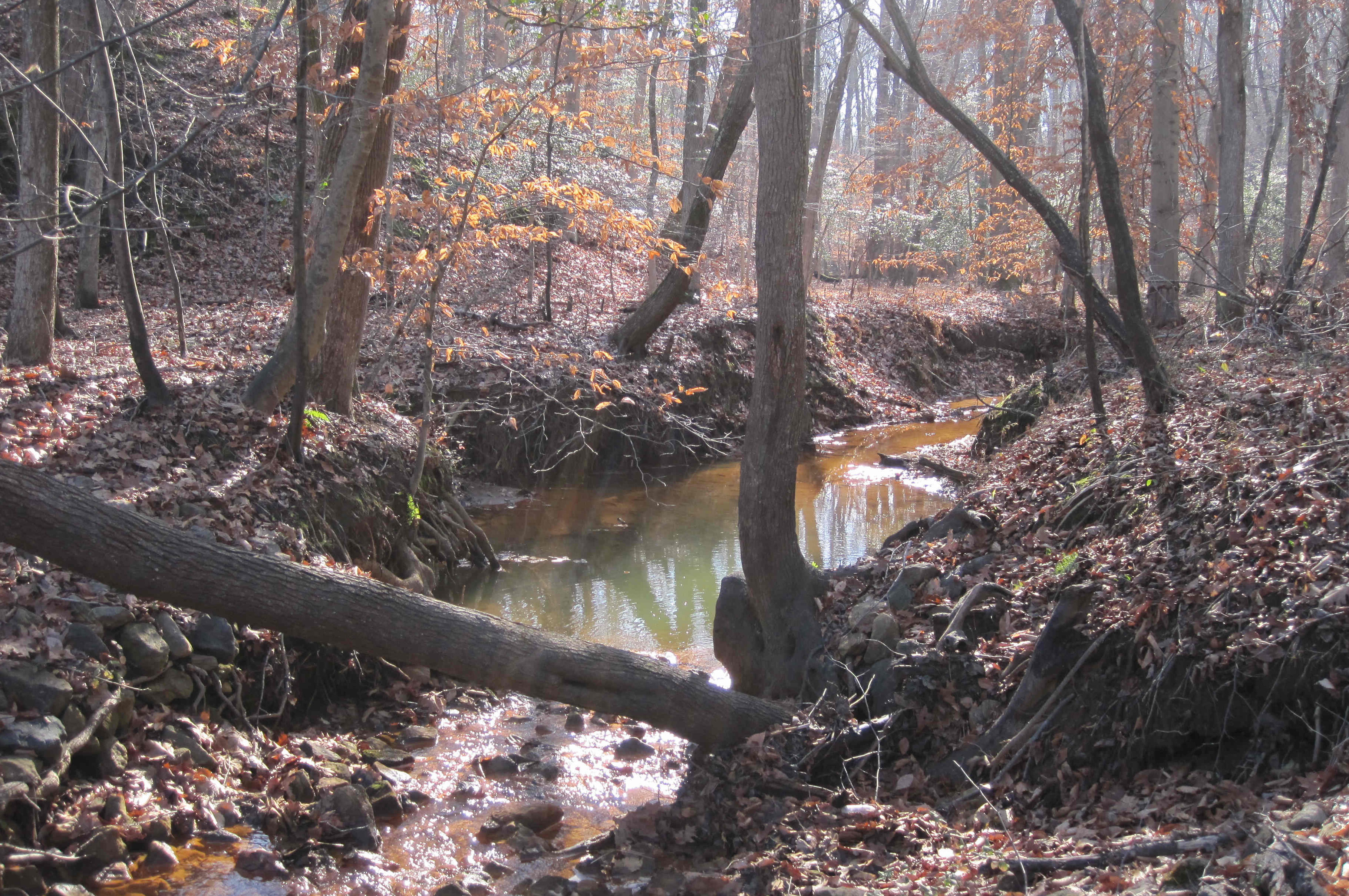 A small stream flowing through Pine Tree's hiking trail.
