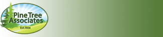 Pine Tree Associates Logo
