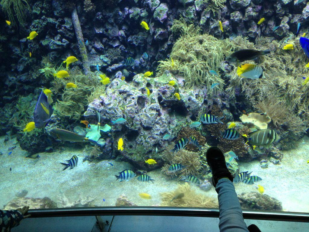 TripGetest op uitstap naar de Zoo van Antwerpen