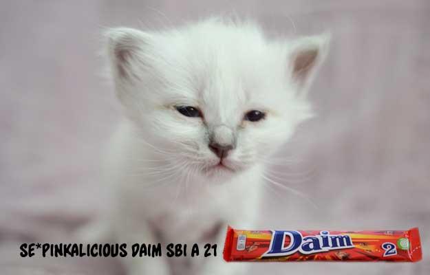 Mini-vaniljerna-2016-Daim