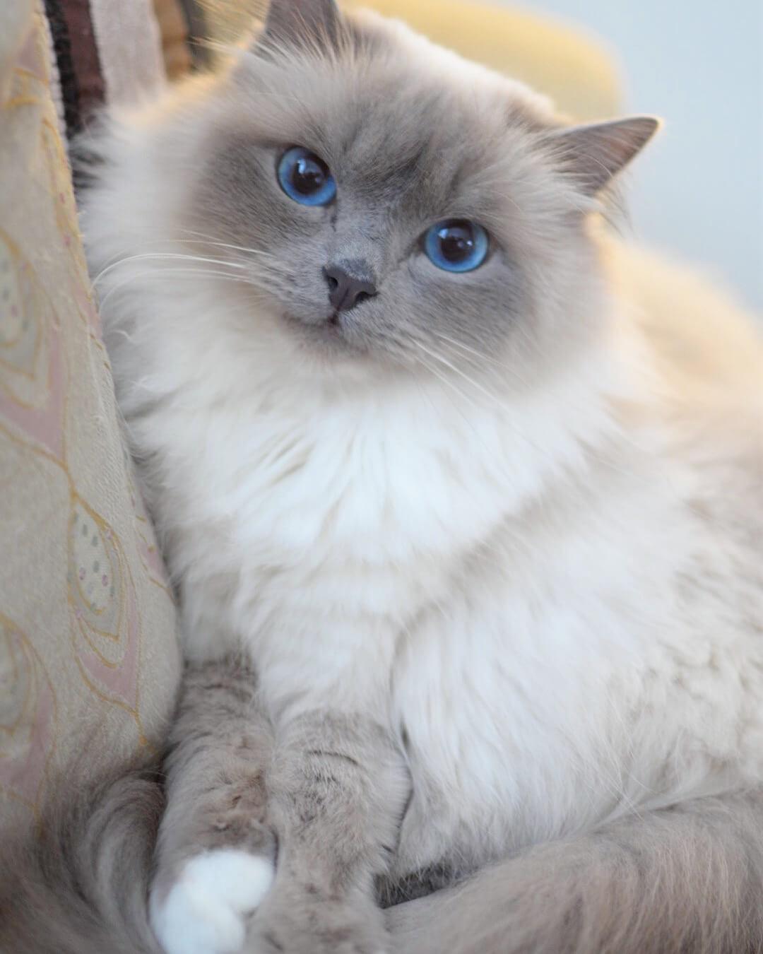 Image of Pinkalicious Mazarin