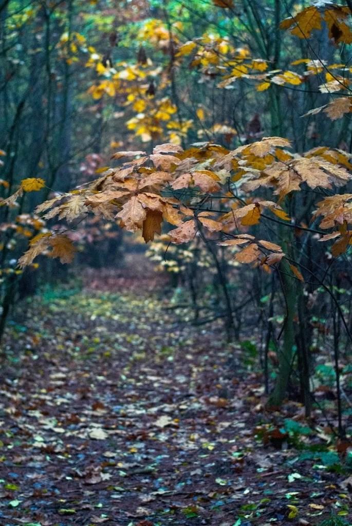 Lasy pod Wrocławiem
