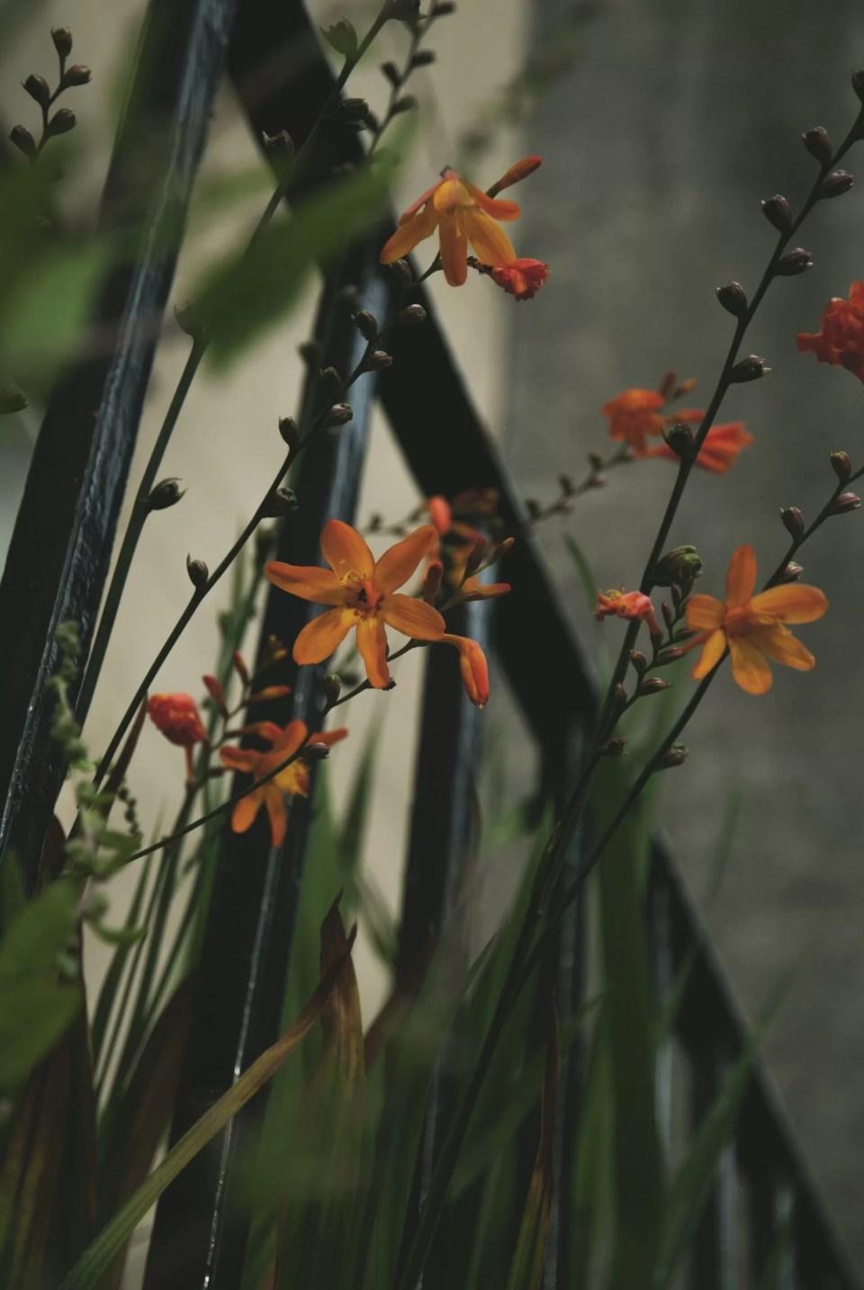 Zdjęcia kwiatów makro