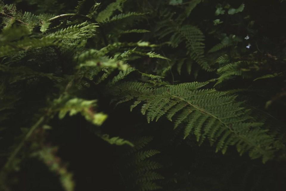 rosliny-ciekawostki