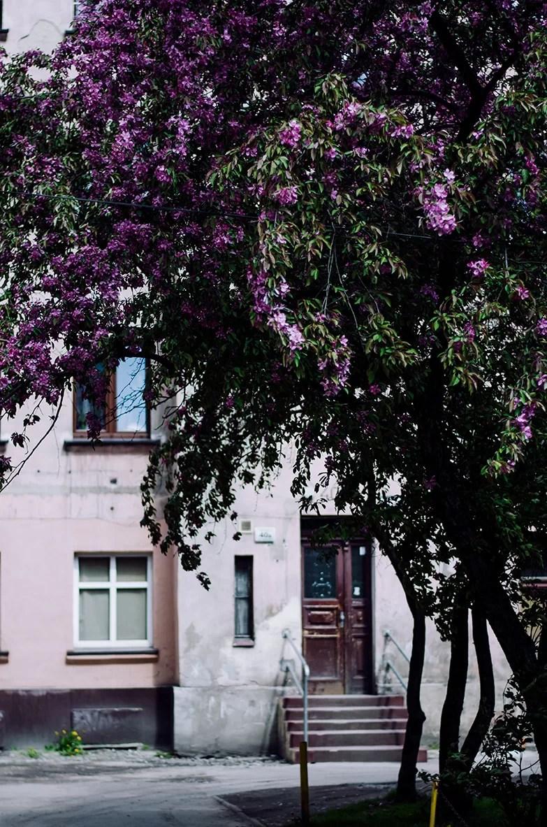 maj wroclaw