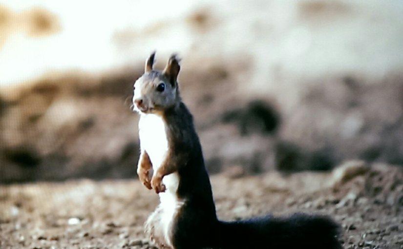 Nature Documentaries – <em> River Fox </em>