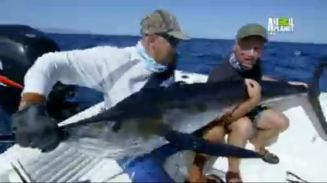 Image of Jeremy Wade fishing for marlin in Season 8 of River Monsters.