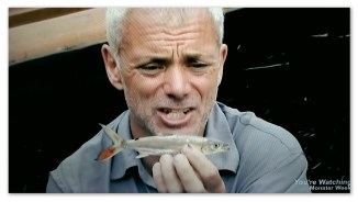 Image of a baby Goliath Tigerfish held by Jeremy Wade