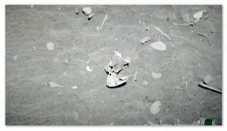 Image of a parrotfish skull in a fish cemetery in Mexico