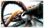 Image of a Humboldt squid's beak