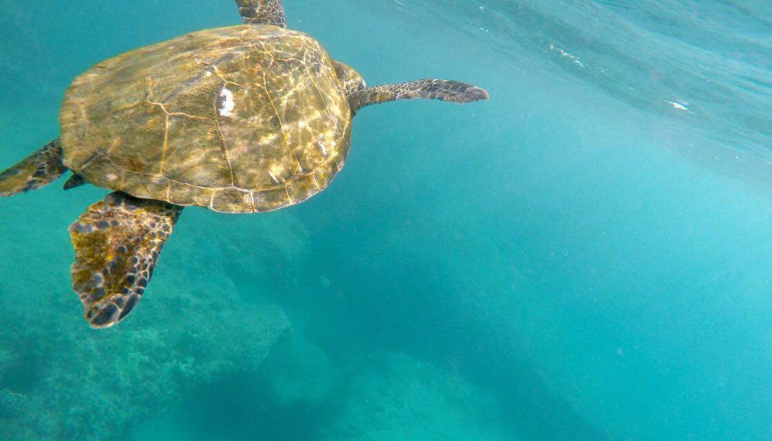 Meine Reisetipps für Oahu-Hawaii