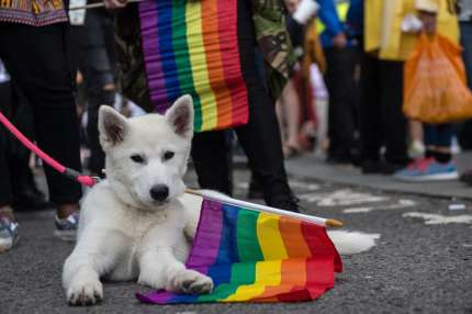 Dog chewing on the rainbow pride flag