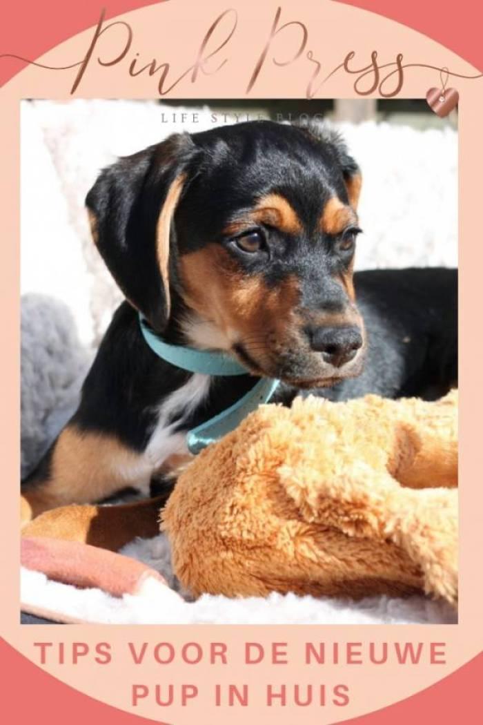 tips voor de nieuwe pup in huis ook voor de kinderen 1 - Tips voor de nieuwe pup in huis