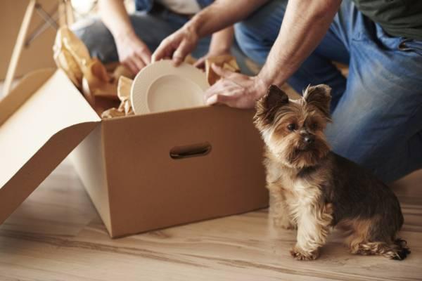 PPverhuizen - Het belangrijkste bij verhuizen: dit moet op je checklist!