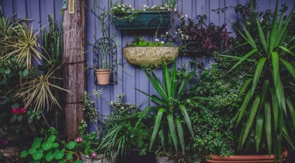 lente tuin - Met deze tips heb je tegen de lente weer een prachtige tuin
