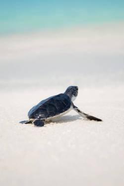 Zeeschilpad strand Unsplash1533374900843 JcobNasyr - Het wereldvreemde kind