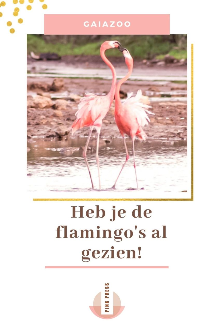 De flamingos in de GaiaZoo