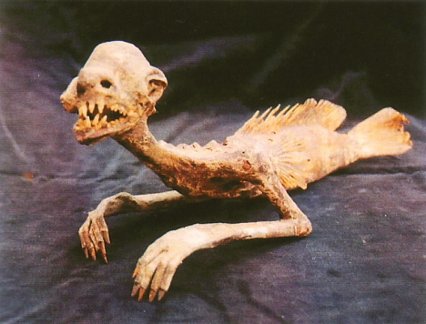 "The ""Feejee Mermaid"""