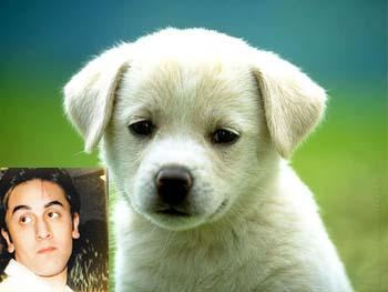 Image result for ranbir puppy