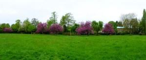 Pinner Village Gardens