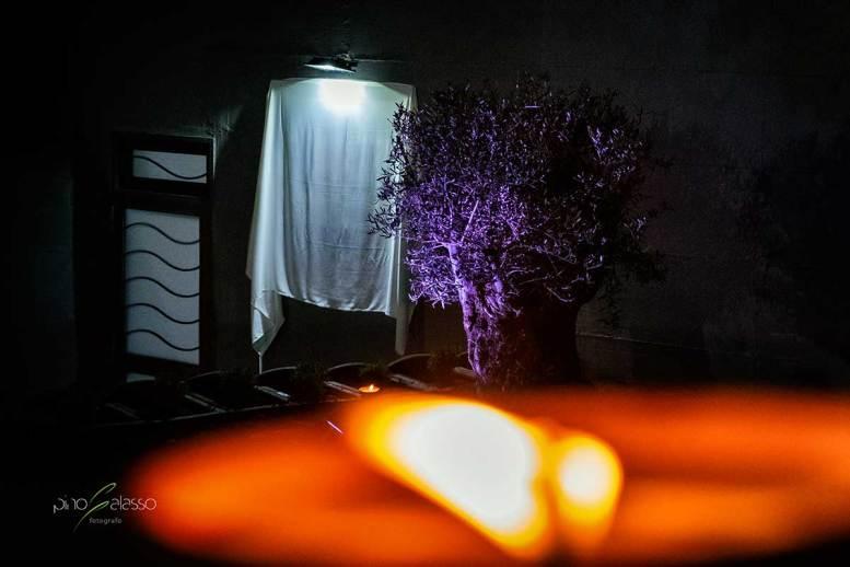 un ulivo piantato all'entrata della casa di francesco