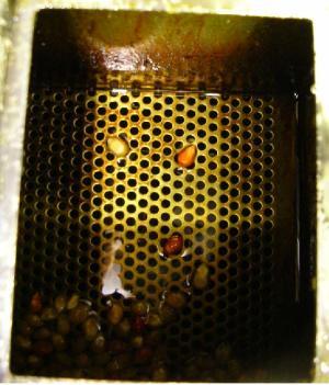 Popcorn machines Minit Pop, UPopIt, Popmaticorn, Popcorn