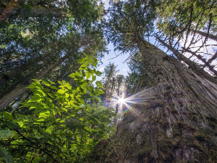 Light shining through the forest canopy