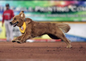 Trenton Thunder bat dog Rookie in his debut on opening day 2015 (Jessica Kovalcin)