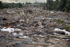 destroyed pinyon pine and juniper forest