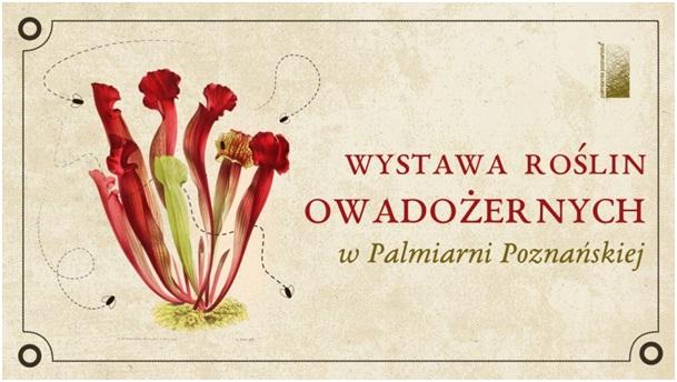 Plakat wystawy. Z lewej strony czerwono-zielona roślina, z prawej napis Wystawa Roślin Owadożernych w Palmiarni Poznańskiej