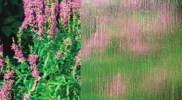 cny-Rainyvue