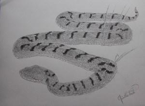 Aspisviper-Zeichnung