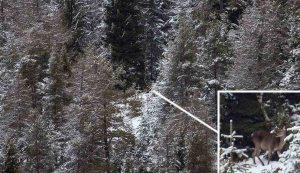 Hirschkuh im Winterwald