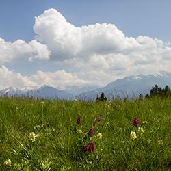 Naturpark Trudner Horn-Orchideenwiese