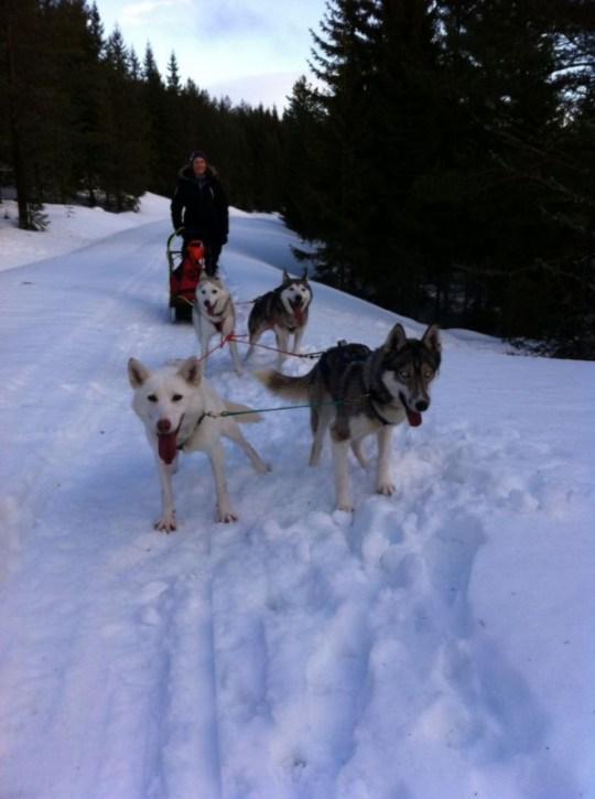 EW med Dolly, Zarya (led), Nala og Runner