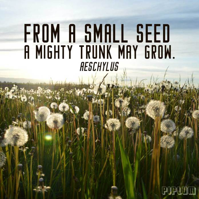 Inspirational Quote. A field full of sow thistle and dandelions.
