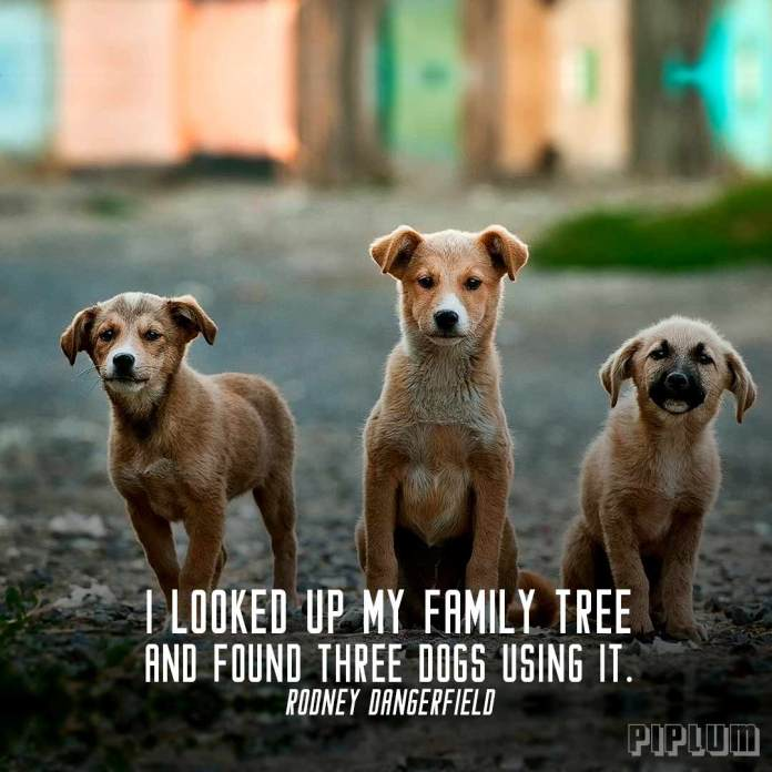 Family quote. 3 dogs looking straight at the camera