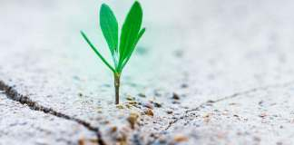 small-things-matter-ecological-world-quote-tree-seedling-plant