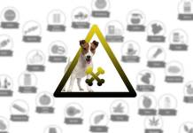 What-human-food-is-toxic-for-dogs